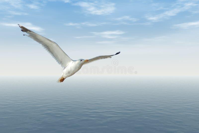 πετώντας seagull στοκ εικόνα