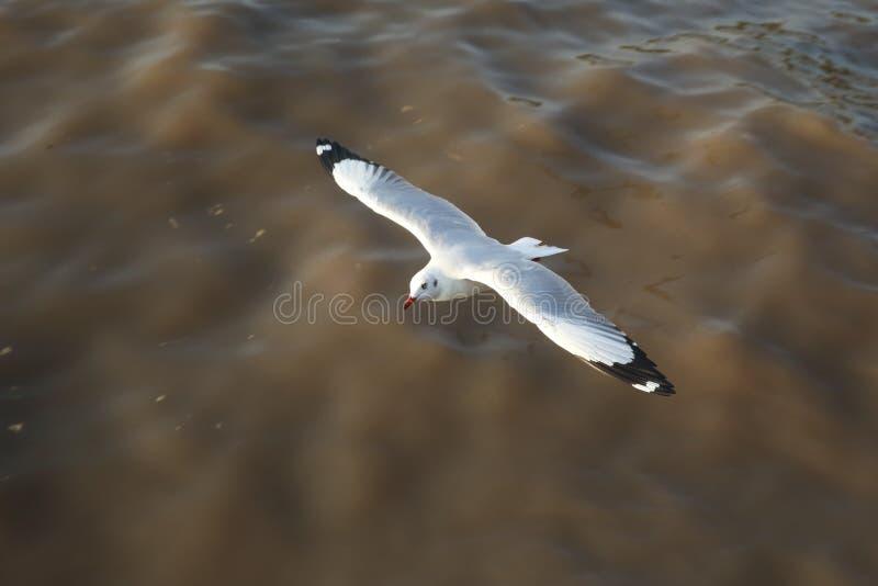 Πετώντας seagulls τοπ άποψης στον ωκεανό στοκ εικόνες