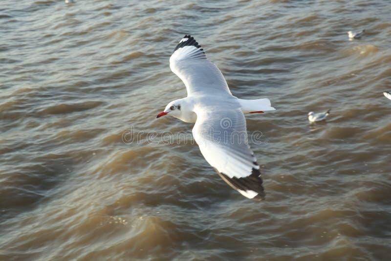 Πετώντας seagulls τοπ άποψης στον ωκεανό στοκ εικόνα με δικαίωμα ελεύθερης χρήσης