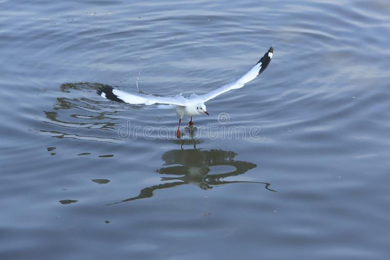 Πετώντας seagulls τοπ άποψης στον ωκεανό στοκ φωτογραφία με δικαίωμα ελεύθερης χρήσης