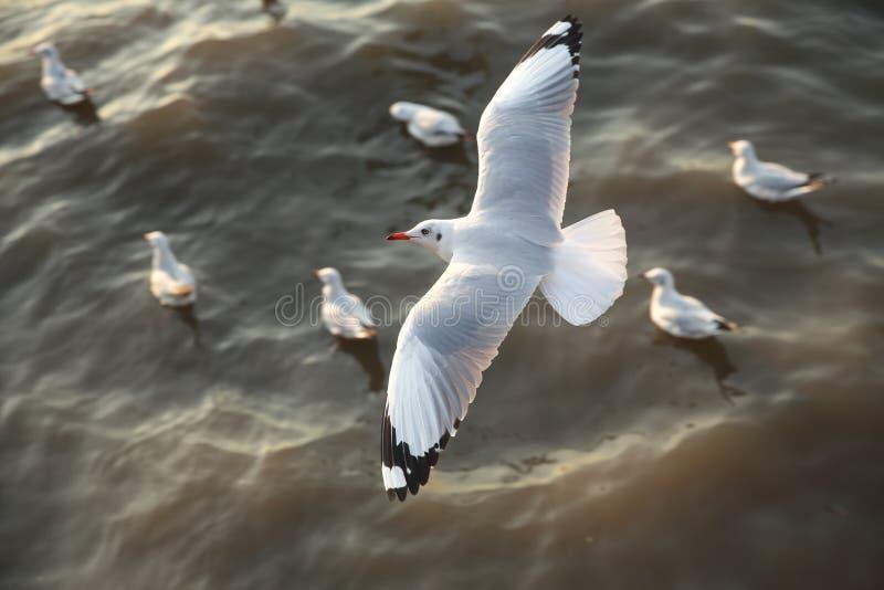 Πετώντας seagulls τοπ άποψης στον ωκεανό στοκ φωτογραφία