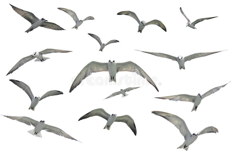 Πετώντας Seagulls στοκ εικόνες