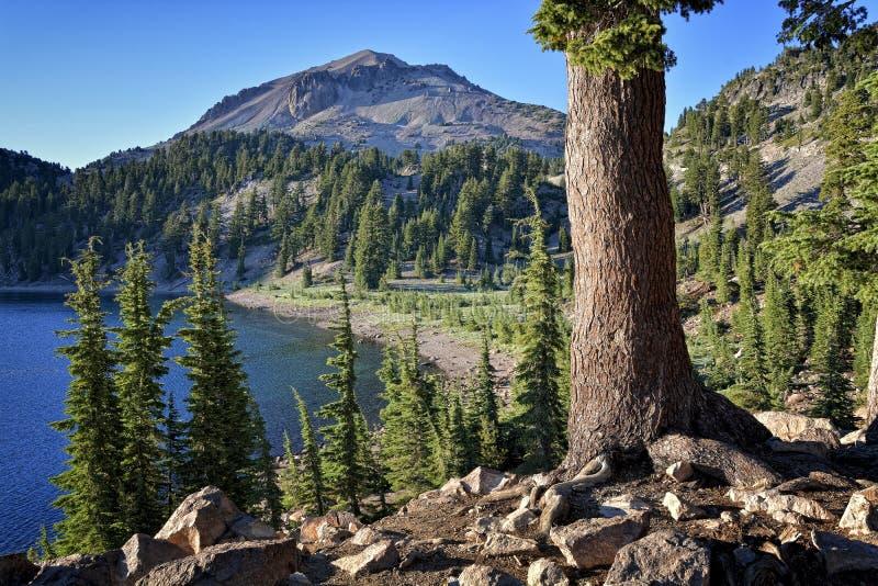 Πεύκο, λίμνη Helen και αιχμή Lassen, ηφαιστειακό εθνικό πάρκο Lassen στοκ φωτογραφία με δικαίωμα ελεύθερης χρήσης