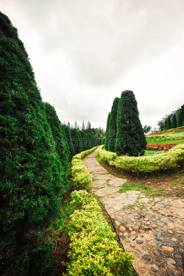 Πεύκο και λουλούδια κήπων στοκ φωτογραφία