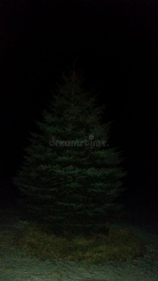 Πεύκο χειμερινής νύχτας στοκ εικόνες