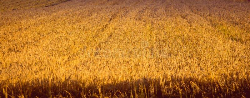 πεδίο κριθαριού farme ώριμο στοκ φωτογραφίες