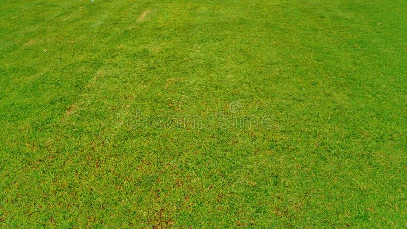 πεδίο πράσινο στοκ εικόνα