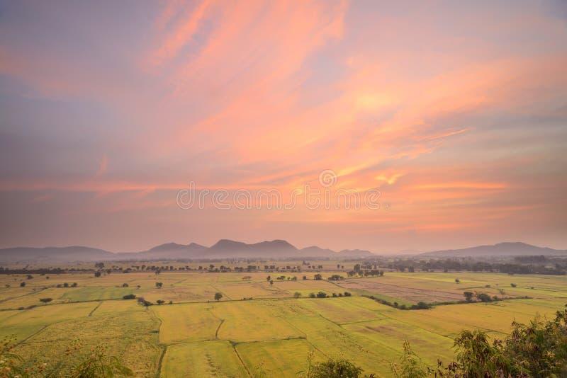 Πεδίο ρυζιού με το ηλιοβασίλεμα στοκ φωτογραφίες με δικαίωμα ελεύθερης χρήσης