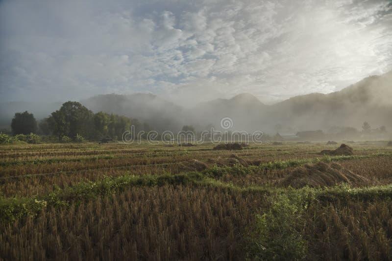 Πεδίο ρυζιού στη βόρεια Ταϊλάνδη στοκ εικόνα με δικαίωμα ελεύθερης χρήσης