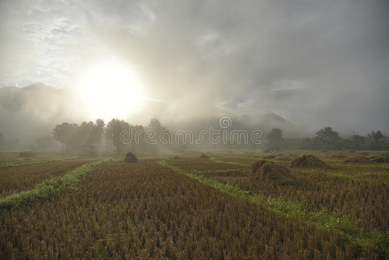 Πεδίο ρυζιού στη βόρεια Ταϊλάνδη στοκ εικόνες