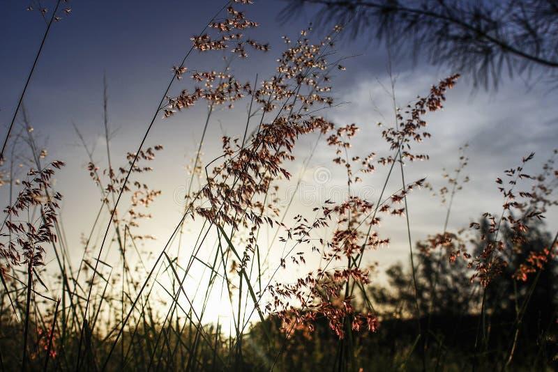 Πεδίο στο ηλιοβασίλεμα στοκ εικόνες με δικαίωμα ελεύθερης χρήσης
