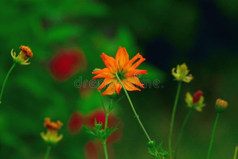 Πεδίο των λουλουδιών στοκ φωτογραφία