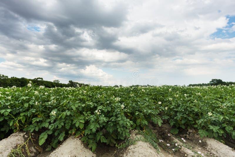 Πεδίο Potatoe στοκ φωτογραφία