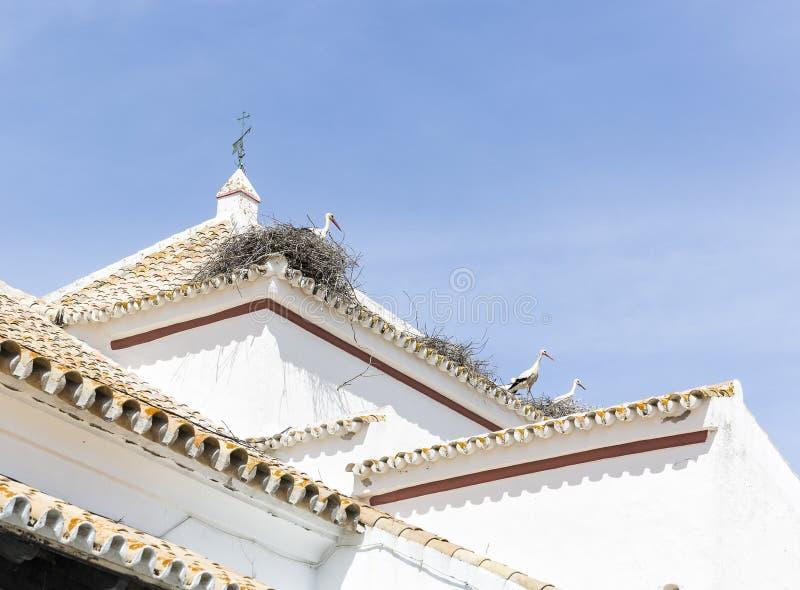 Πελαργοί στις φωλιές τους σε μια στέγη ενός άσπρου κτηρίου Castilblanco de Los Arroyos, Ισπανία στοκ φωτογραφίες