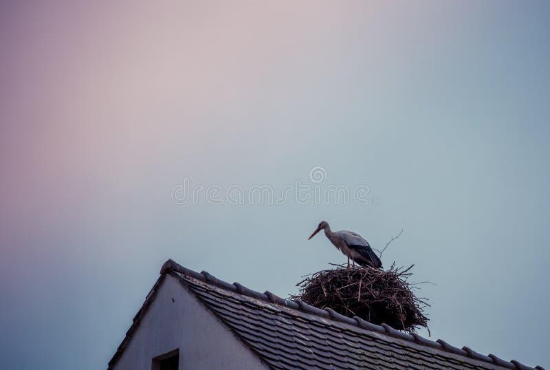 Πελαργός στη στέγη στοκ φωτογραφίες