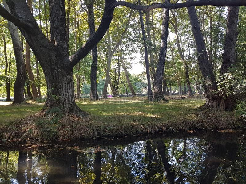 Πηγή λιμνών στοκ εικόνα με δικαίωμα ελεύθερης χρήσης