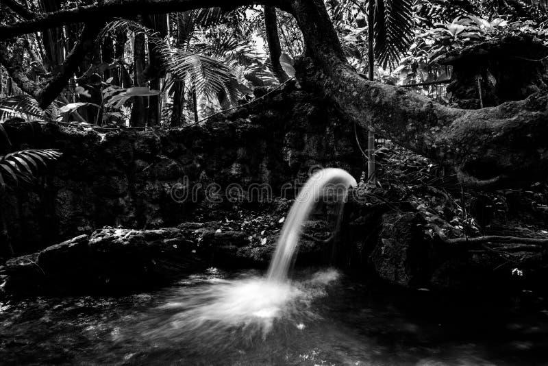 Πηγή νερού, κήποι Pinecrest, Μαϊάμι, Φλώριδα, ΗΠΑ στοκ εικόνες