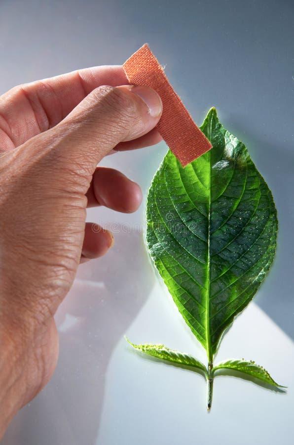 Download πηγαίνετε πράσινος στοκ εικόνα. εικόνα από φυτό, σημάδι - 22787471