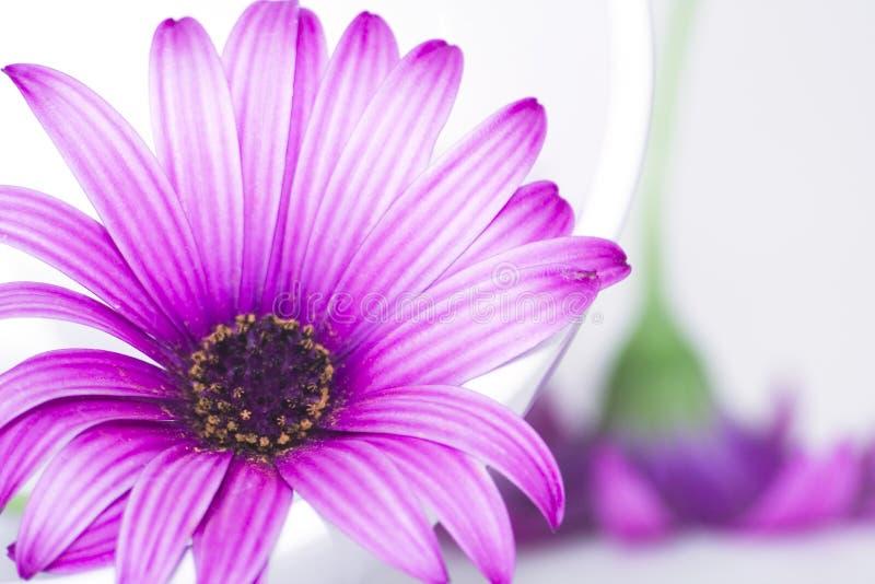Πιάτο και λουλούδια στοκ εικόνες