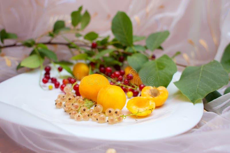 Πιάτο με τα θερινά μούρα Βερίκοκα, σταφίδα, ένα κεράσι πουλιών σε ένα άσπρο πιάτο στοκ εικόνα