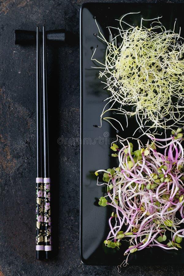 Πιάτο των φρέσκων νεαρών βλαστών στοκ φωτογραφία με δικαίωμα ελεύθερης χρήσης