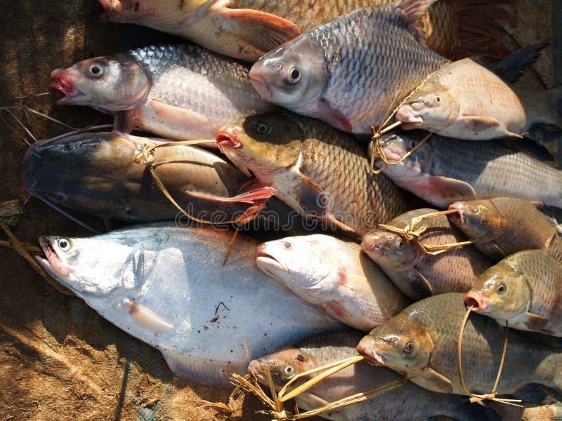πιασμένος mekong ψαριών ποταμός στοκ εικόνα με δικαίωμα ελεύθερης χρήσης