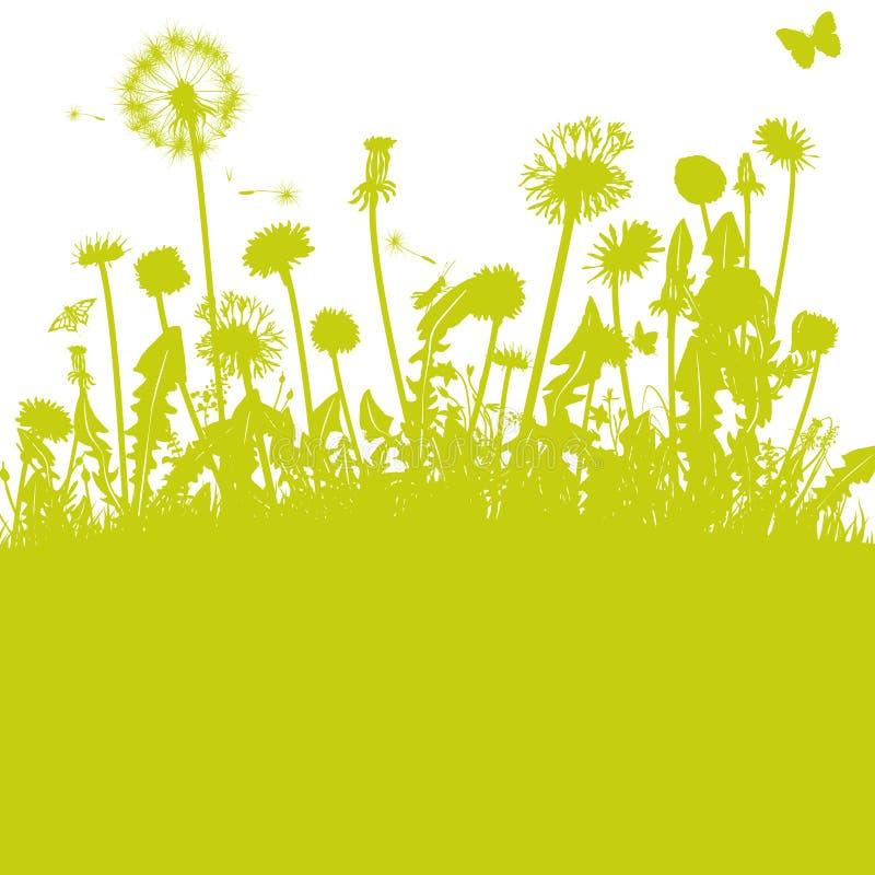 Πικραλίδες στο πράσινο λιβάδι απεικόνιση αποθεμάτων