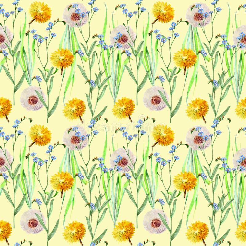 Πικραλίδες, λουλούδια λιβαδιών, watercolor, σχέδιο άνευ ραφής απεικόνιση αποθεμάτων