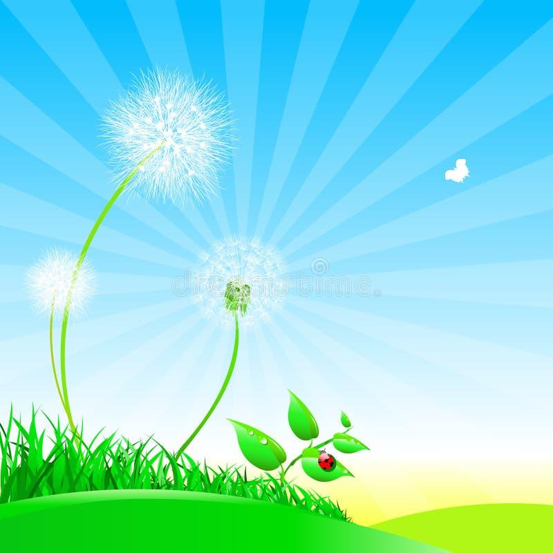 Πικραλίδες σε ένα θερινό λιβάδι ελεύθερη απεικόνιση δικαιώματος