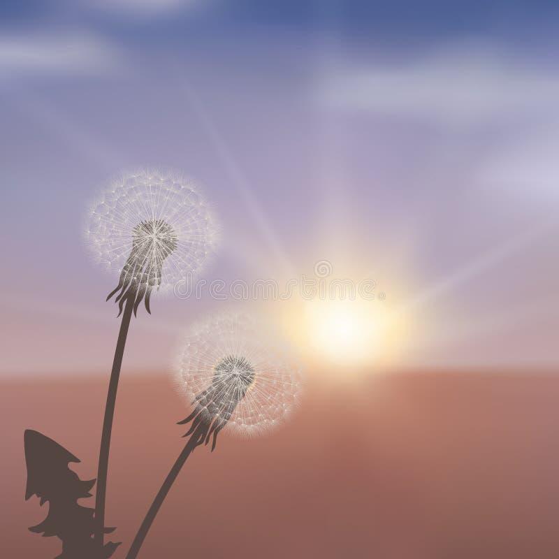 Πικραλίδες στο λιβάδι στο κόκκινο ηλιοβασίλεμα απεικόνιση αποθεμάτων