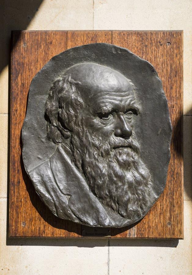 Πινακίδα του Charles Δαρβίνος στο Καίμπριτζ στοκ φωτογραφίες με δικαίωμα ελεύθερης χρήσης