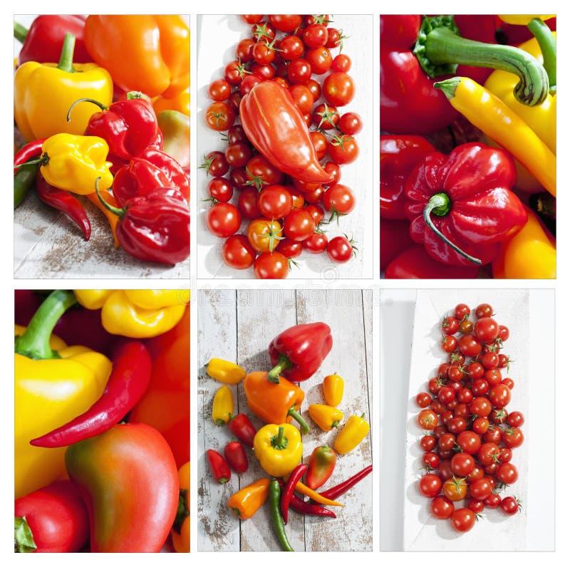 Πιπέρια κουδουνιών, chilis, habaneros και ντομάτες, κολάζ στοκ εικόνα