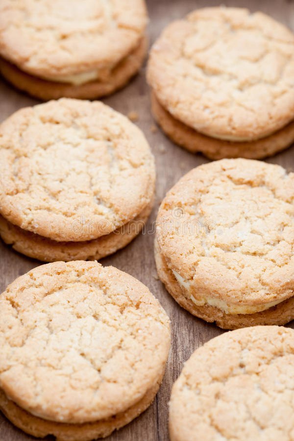 πιπερόριζα μπισκότων στοκ φωτογραφίες