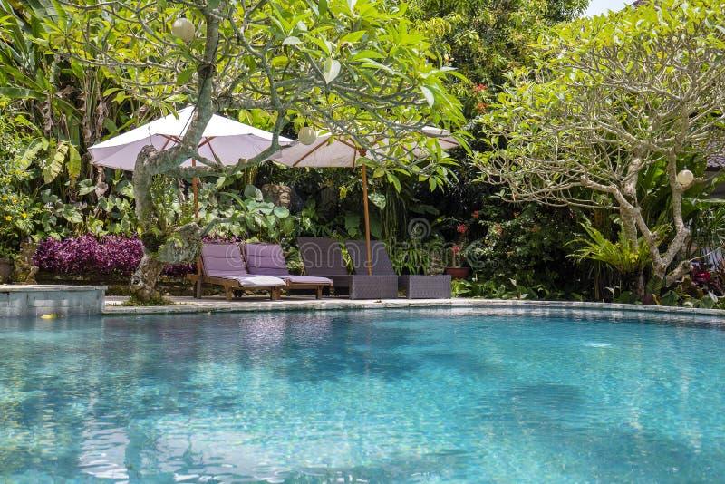 Πισίνα, μπλε νερό, πράσινα φύλλα των δέντρων και καρέκλες γεφυρών στον τροπικό κήπο Μπαλί, Ubud, Ινδονησία στοκ φωτογραφία με δικαίωμα ελεύθερης χρήσης