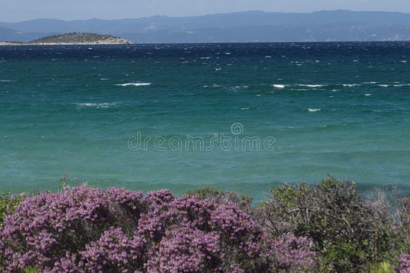 Πιό μπλε θάλασσα πάντα Πορφυρά λουλούδια Vourvourou Ελλάδα στοκ φωτογραφίες