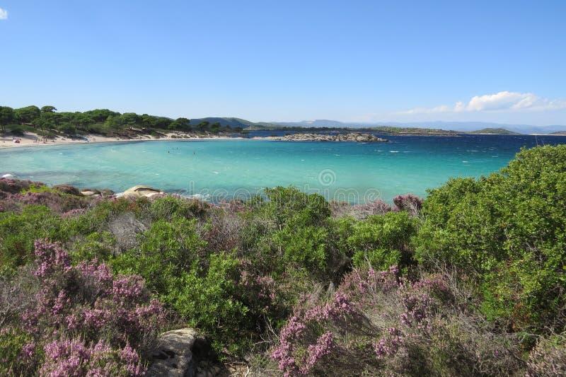 Πιό μπλε θάλασσα πάντα Πορφυρά λουλούδια Vourvourou Ελλάδα στοκ εικόνες