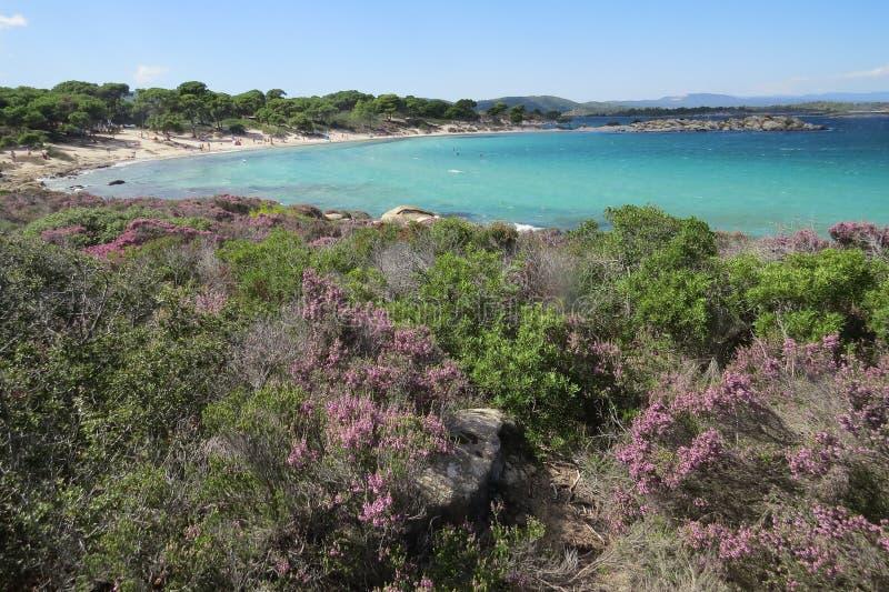 Πιό μπλε θάλασσα πάντα Πορφυρά λουλούδια Vourvourou Ελλάδα στοκ εικόνα