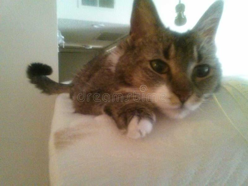 Πιό χαριτωμένο γατάκι στοκ φωτογραφίες