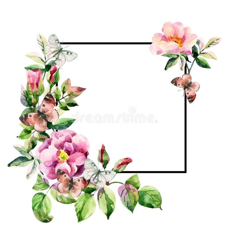 Πιό brier λουλούδια Watercolor και κάρτα πεταλούδων με το μαύρο τετραγωνικό πλαίσιο διανυσματική απεικόνιση