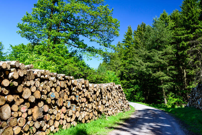 Πιό forrest πορεία Harz με την ξυλεία στοκ φωτογραφία με δικαίωμα ελεύθερης χρήσης