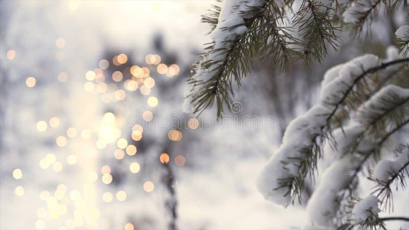 Πλάγια όψη ενός κοριτσιού που τρέχει κοντά στον κλάδο δέντρων με τα λάμποντας θολωμένα πυροτεχνήματα στο υπόβαθρο, έννοια Χριστου στοκ εικόνα με δικαίωμα ελεύθερης χρήσης