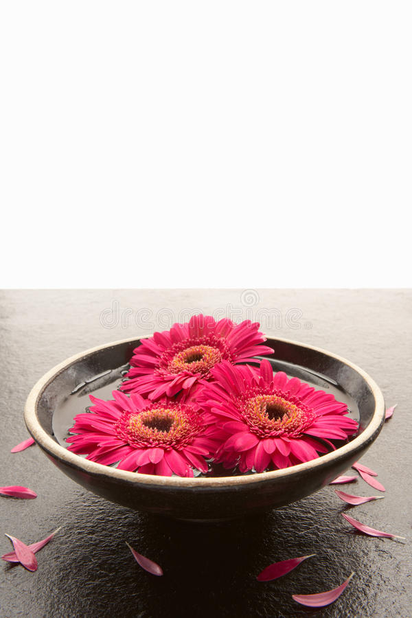 πλάκα κεφαλιών λουλου&d στοκ εικόνα