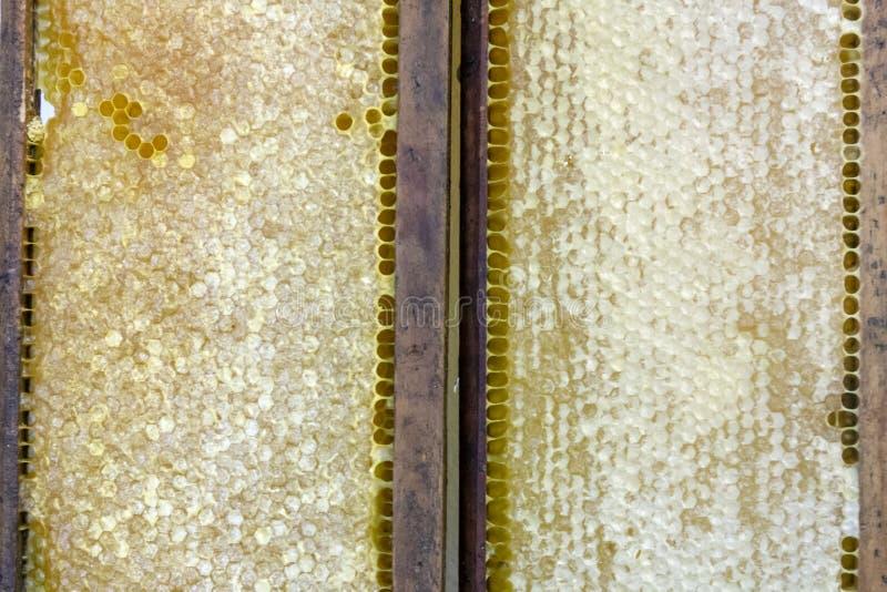 πλήρες γλυκό μέλι στην κηρήθρα στοκ φωτογραφίες με δικαίωμα ελεύθερης χρήσης