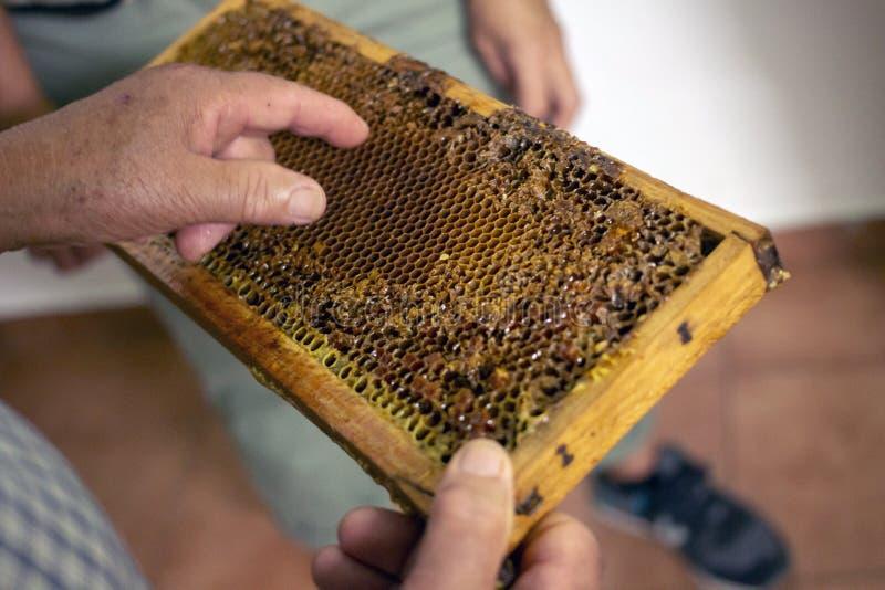 πλήρες γλυκό μέλι στην κηρήθρα στοκ φωτογραφία με δικαίωμα ελεύθερης χρήσης