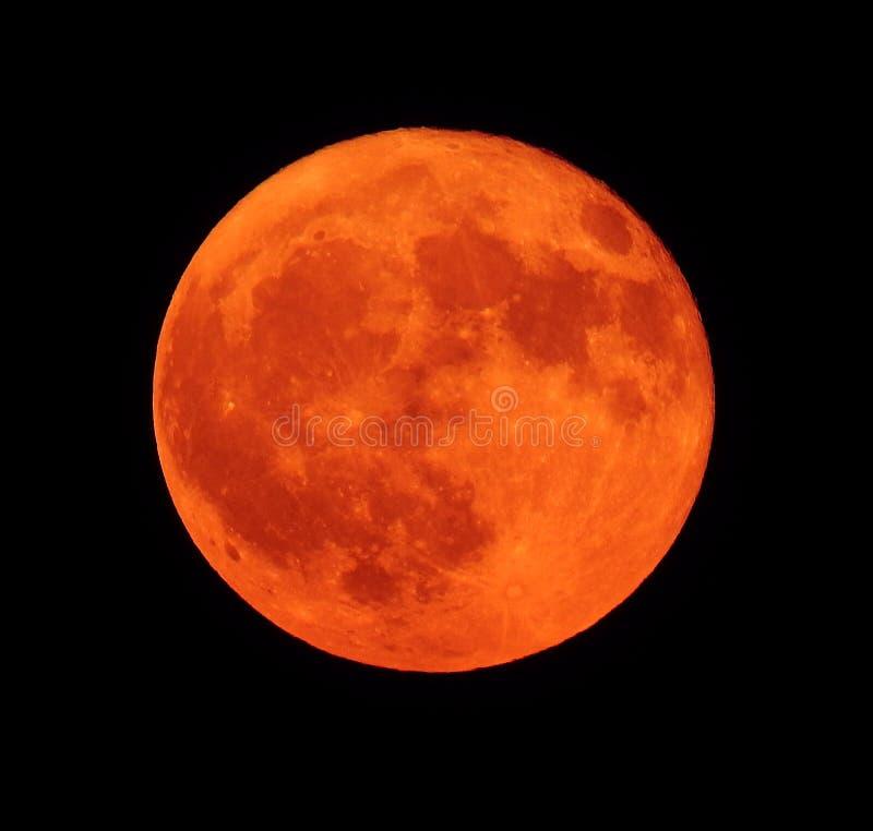 Πλήρες πορτοκαλί φεγγάρι παγετού ή καστόρων το Νοέμβριο στοκ φωτογραφίες