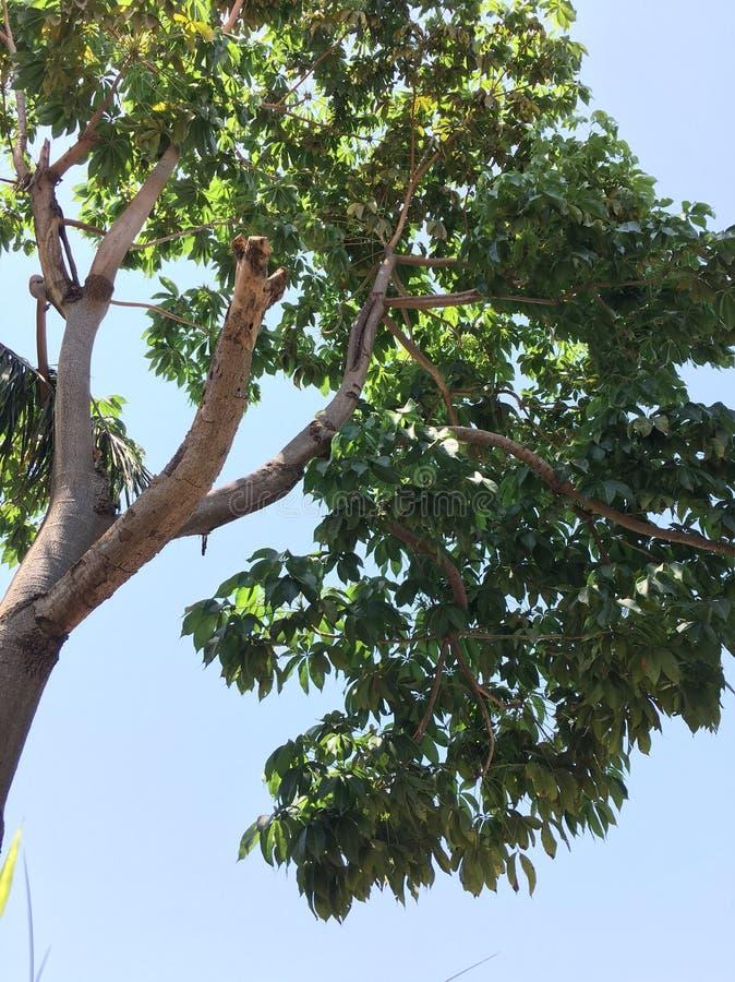 Πλήρες πράσινο φρέσκο δέντρο στοκ εικόνες με δικαίωμα ελεύθερης χρήσης