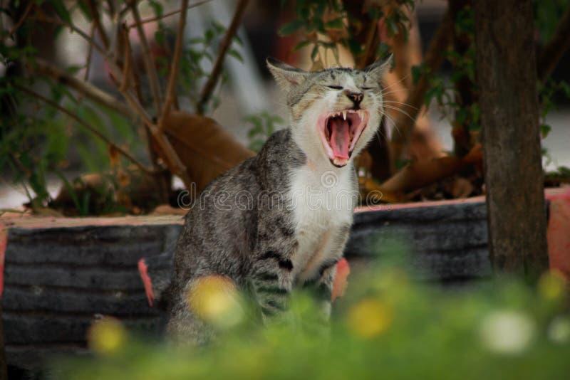 Πλήρωμα Mitret | γάτα στοκ εικόνες