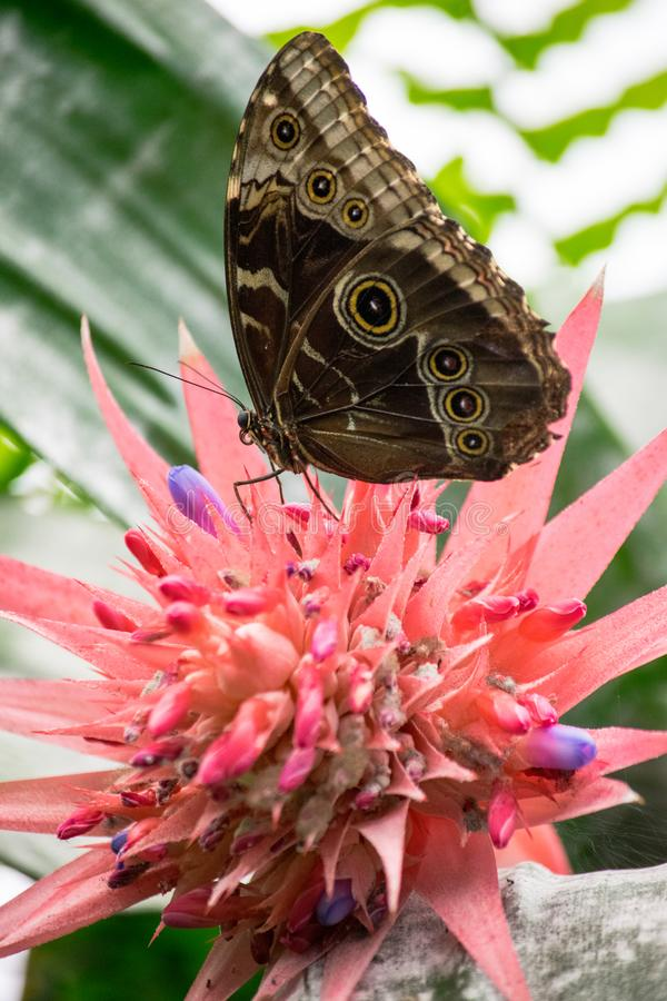 Πλήρωση πεταλούδων επάνω στο νέκταρ στοκ εικόνες