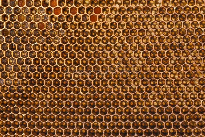 Πλαίσια μελισσών με το μέλι στοκ φωτογραφίες με δικαίωμα ελεύθερης χρήσης