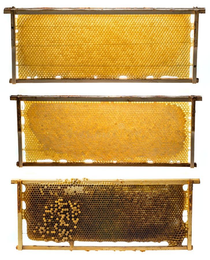 Πλαίσια μελισσών με το τσούρμο μελιού και μελισσών στοκ εικόνες